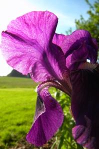 Iris2_SP